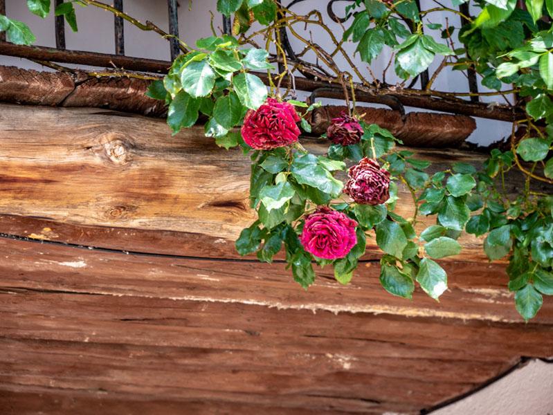 rosen falles d'isil
