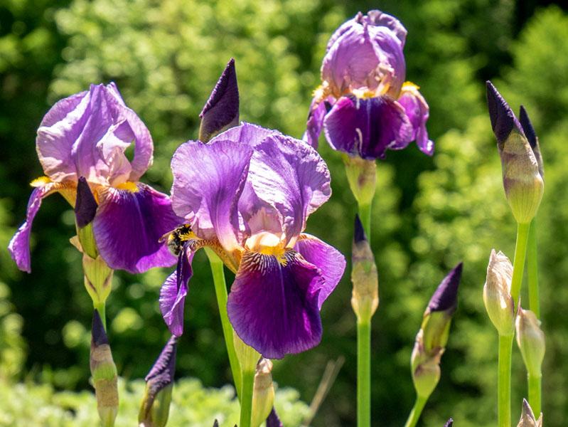 orchideen blumen