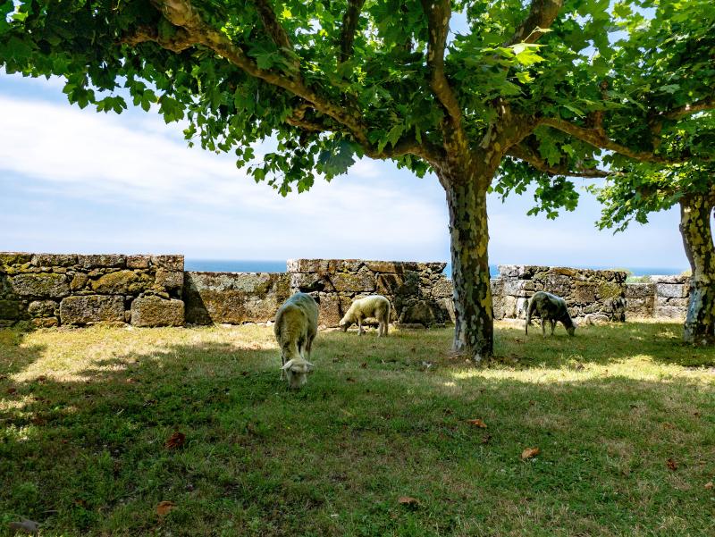 schafe kloster oia galicien