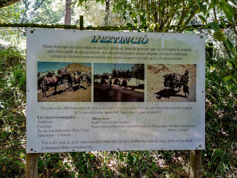 katalanischer Esel wandern mit esel rukimon