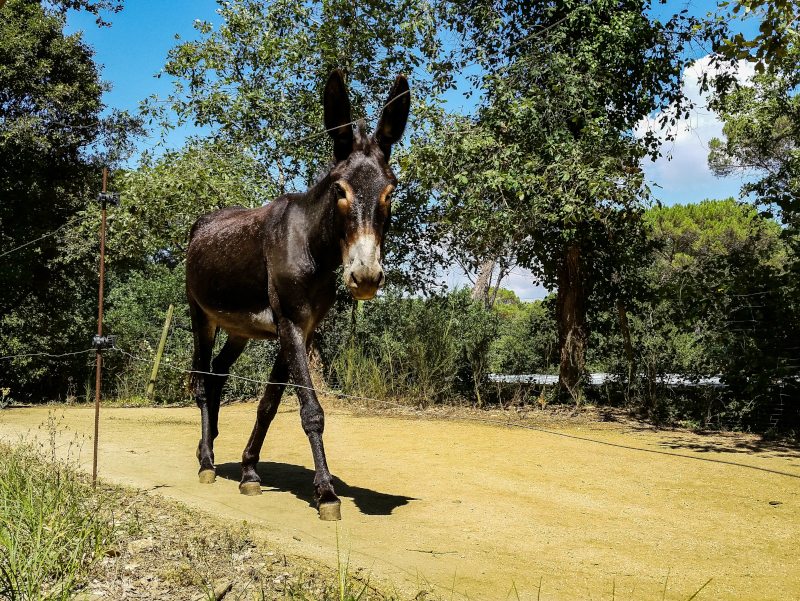 katalanische Esel wandern mit esel rukimon