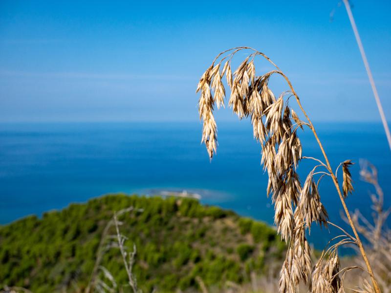 blick auf punta licosa isola monte licosa Nationalpark Cilento