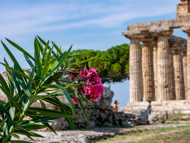 griechische tempel in paestum poseidonia