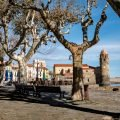Hafen Kirche Collioure