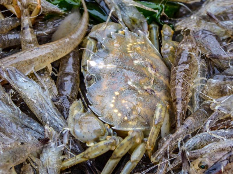 Krabben fischer Meer