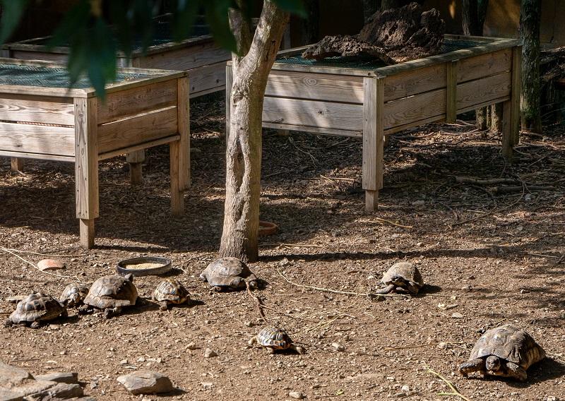 exotische arten schildkroetenzentrum gariguella