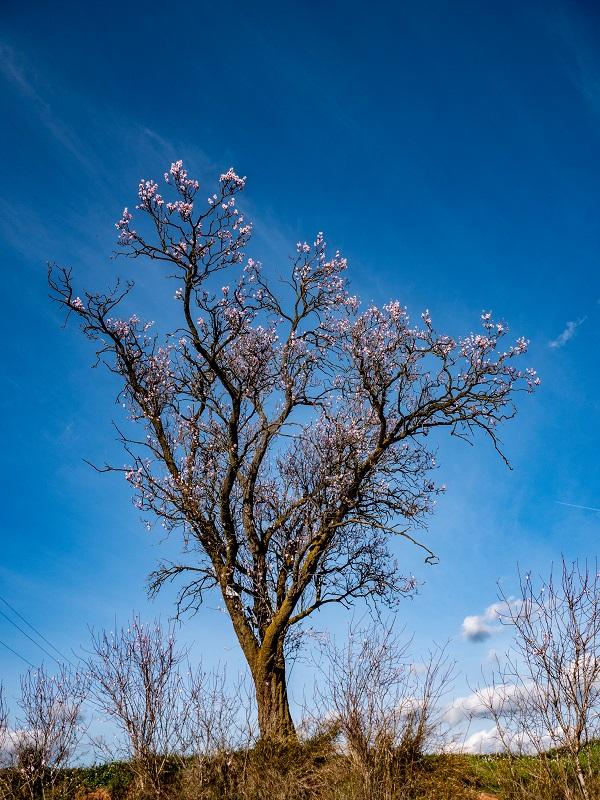 mandelbaum felder spaziergang cardedeu
