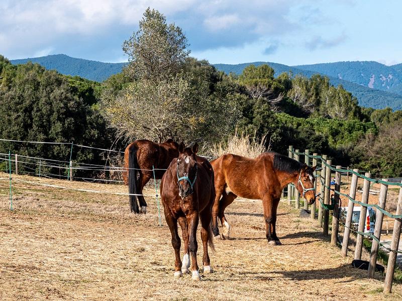 pferde ben feler spaziergang cardedeu