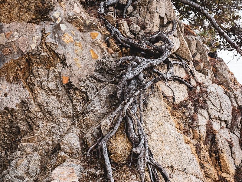 knorrige wurzeln Meer Costa Brava