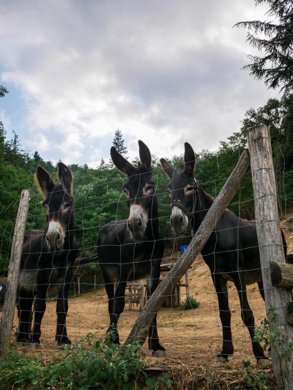 Montseny Unterkunft Mas Vilar katalanische Esel