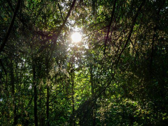 Wandern und Waldbaden im Montseny