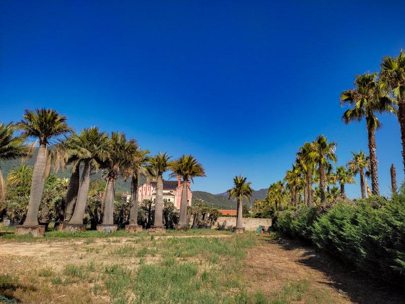 palmen-amer-promenade
