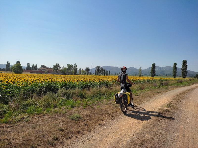 Sonnenblumen Radtour Katalonien